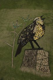 Former Lawrence resident Daniel Dancer collaborated with students at Schwegler School, 2201 Ousdahl Road, at a recent event to create the image of a western Meadowlark as part of a series of educational prairie-related events. The 350 in the image is the safe upper limit parts per million of carbon dioxide in the air.