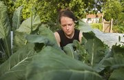 Amber Lehrman works in her garden. The Lawrence Food Garden Tour co-founder says her family grew about 30 to 40 percent of their food last year.