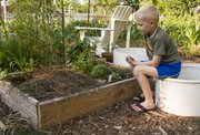 Noah Chaney looks over the basil, cilantro and banana peppers growing in his small plot at the Lawrence Community Garden Project near 920 Miss. The community garden, which is one of the oldest in Lawrence, was featured on the annual Food Garden Tour of Lawrence in summer 2011.