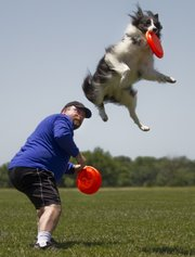 Yard Dart, a border collie mix, grabs a frisbee out of the air and off the back of his owner, Adrian Custer, Gray Summit, Mo., on Saturday in the advanced freestyle event in the Land of Oz Kansas State Disc Dog Championships at the Youth Sports Complex, 4911 W. 27th St., in Lawrence. This was the first-ever contest, with winners qualifying for the world championships this September in Chattanooga, Tenn.