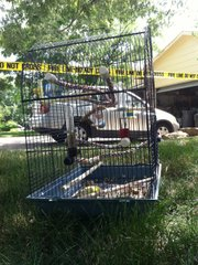 A bird cage sits outside the home on Cynthia Street where a fire was reported on Tuesday, July 5, 2011. The bird in the cage died. The fire was reported under control shortly after 4 p.m.