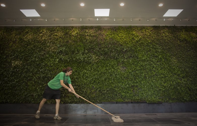 "Recent graduate of the masters program for architecture, Allison Pinkerton, Grandview, Missouri, sweeps the steel plate floor in front of the ""living wall,"" which is composed of various types of ferns."