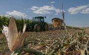Kent Nunemaker cuts corn for silage for Nunemaker-Ross farm Tuesday, August 2, 2011. Nunemaker said they were cutting about three to four weeks early because the crop was showing signs of the effects of the extreme heat and lack of rain.
