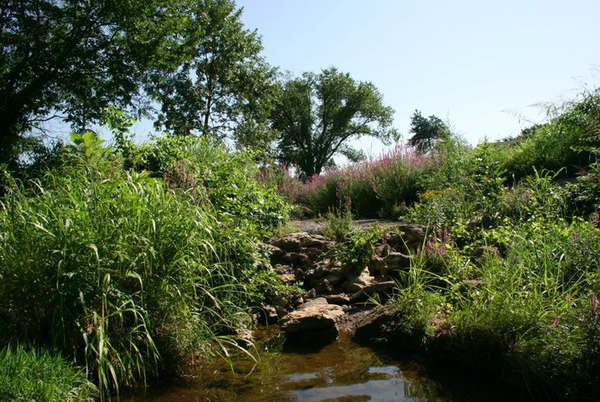In 2010, volunteers with the Grassland Heritage Foundation helped pull 40 bags worth of purple loosestrife (seen upstream in this photo) along a drainage area at the intersection of Clinton Parkway and Atchinson Avenue. While pretty, loosestrife is on the list of quarantined invasive weeds in Kansas.