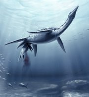 This undated image provided by the journal Science shows a life reconstruction of the plesiosaur Polycotylus latippinus giving birth to a single, large young, based on fossil evidence from the Upper Cretaceous (80 million years ago) of Kansas. The giant reptile was pregnant when she died more than 70 million years ago, according to a new analysis of the remains that offers the first proof that Plesiosaur gave birth to live young rather than laying eggs.