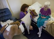 Rae Warren, left, brought her 4-year-old miniature horse Cindy to the bedside of resident Betty Benz during a visit Thursday at the Baldwin Healthcare Rehabilitation in Baldwin City.  Warren bought the horse earlier this year for the sole purpose of visiting nursing homes.