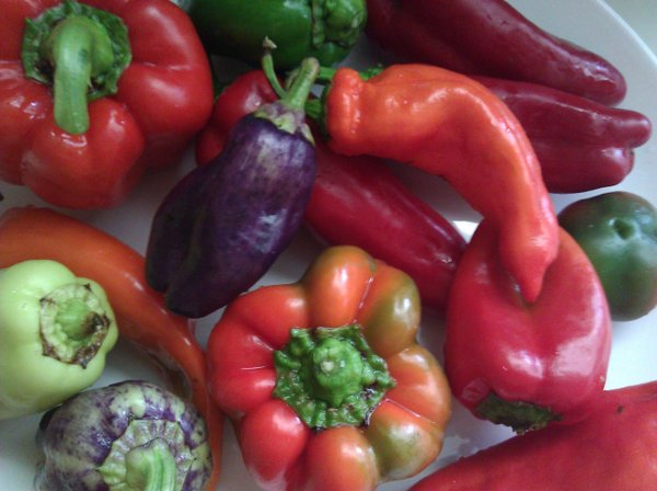 Plenty of peppers from the garden, the CSA, the farmers' market and neighbors.
