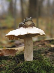The legend has it that fairy rings sprouted up in a circle to allow toads and other woodland creatures a place to hold roundtable discussions.