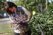 Late blooming shrubs can add warm, fall colors to any garden. Some of Jennifer Smith's favorites include beautyberry, vitex agnus-castus, also known as chaste tree.
