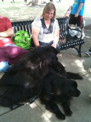 Kathy Freed, of Lenexa, rests in the shade with her Newfoundlands — a mother and her son — during the second annual Dogtoberfest Sunday, Oct. 9, 2011, in South Park.