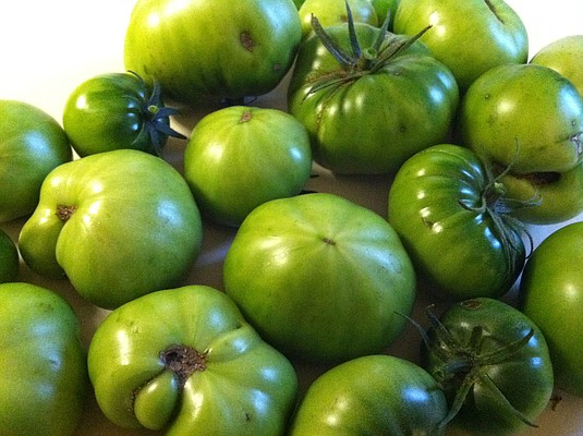 I picked about 20 green tomatoes on Monday ahead of Wednesday's possible freeze.