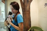 Eleni Roussopoulos, 22, of Lawrence, cuddles with her new kitten, Lynx, at the Lawrence Humane Society. Roussopoulos said she had figured she'd get a gray cat, but fell in love with this black-and-white ball of energy.