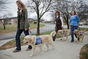 From left, Mandi Holsten, and Shelby walk with Nancy Giossi, and McLaren and Madison Johnson and Spark. All three Lawrence residents are service dog trainers with KSDS Inc., out of Washington, Kan., who help provide people in need of guide dogs, service dogs and social dogs.
