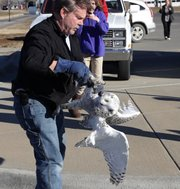 Gary Crain, of Overland Park and a volunteer with Operation Wildlife, rescues an injured snowy owl Monday afternoon at the Jayhawk Station post office, 1901 W. 31st St.