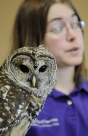 Heather Morgan, a part-time naturalist at Prairie Park Nature Center, shows off an educational Barred Owl to visitors Saturday during the Kaw Valley Eagles Day at Free State High School. Attractions at the event included nature-based arts and crafts, booths featuring environmentally friendly products, and a host of educational activities for kids.