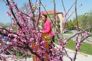 Chancellor Bernadette Gray-Little dedicates the planting of some new redbuds March 29 along Jayhawk Boulevard. A new group of faculty, staff and students at Kansas University is trying to raise money to benefit the many trees throughout the campus.