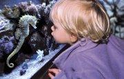 A visitor gets up-close-and-personal with a seahorse at SEA LIFE aquarium at Crown Center in Kansas City, Mo.