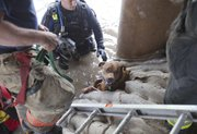 Wichita firefighters free Taz a pit bull mix, who disappeared during a storm in Wichita, Kan., on Thursday afternoon April 12, 2012. After 2 1/2 hours of searching and cutting through concrete, firefighters found the dog safe and sound.