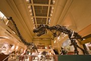 This undated handout photo provided by the Smithsonian Institutions shows the current Dinosaur Hall at the Smithsonian's Museum of Natural History. Energy businessman David H. Koch is donating a record $35 million to the Smithsonian's National Museum of Natural History to build a new dinosaur hall on the National Mall. The Smithsonian is announcing the gift Thursday from the executive vice president of Koch Industries Inc. of Wichita, Kan. It is the single largest gift in the museum's 102-year history.