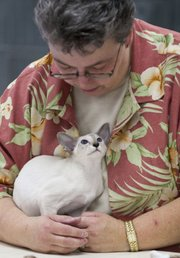 Murlene Priest, of Topeka, judges a Siamese cat during the Kansas City Midwest Cat Club Show Saturday at the Douglas County Fairgrounds, 2120 Harper St. Nearly 90 cats competed in the annual contest, which featured four classes of cats: kittens, purebred adults, alters and household cats.