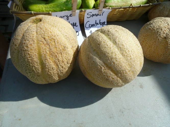 Early season cantaloupes made their first appearance in Avery's Produce booth last week at Cottin's Hardware Farmers Market.