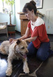 Natural pet healer Cathy King works with Chester Copperpot, a dog owned by Lawrence resident Jared Mellard, Wednesday, July 18, 2012 at Kaw Valley Natural Pet Care, 514 East 9th St. King was working with Chester to try to address issues surrounding recent instances of aggression. Nick Krug/Journal-World Photo