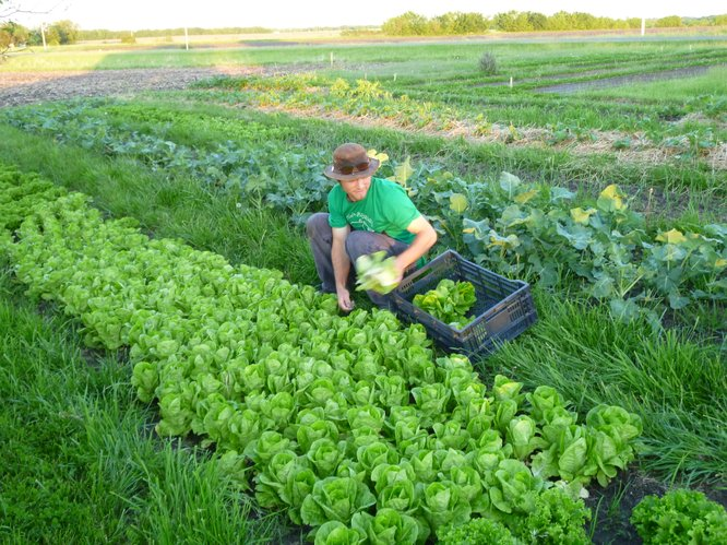 Dan Phleps, MAD Farm, joins an increasing number of young farmers who are hoping to embrace the concept of small scale farms to produce a sustainable flow of fresh, local produce.