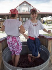 "Jolene Loftin, of Eudora, left, and Melissa Miller, of Lawrence, dance and stomp in a tub full of grapes Saturday at the third annual Grape Stomp at BlueJacket Crossing Vineyard and Winery in Eudora. The two were dressed up as Ethel Mertz and Lucille Ball from the ""I Love Lucy"" episode where they travel to Italy and stomp grapes."