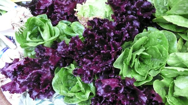 Fresh greens and lettuces are available from Two Sisters Farm at Cottin's Hardware Farmers Market.