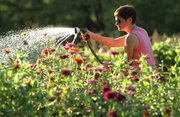 Aimee Polson, co-founder of the Garden Incubator, waters a patch of zinnias during a work evening Tuesday, Sept. 4, 2012, at the community garden near John Taylor Park in North Lawrence.