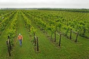 Greg Shipe, owner of Eudora's Davenport Orchard, Vineyard and Winery, which grows nearly all its grapes on site, said a new law shrinking the percentage of Kansas grapes that Kansas wineries must use in their products could threaten the region's unique wine identity.