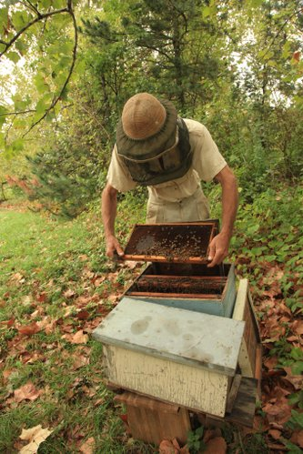 Richard Bean, looks over one of the many hives he has on his farm near Baldwin.