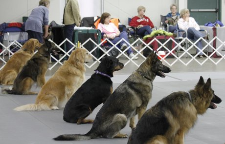 Lawrence Jayhawk Kennel Club Dog Show