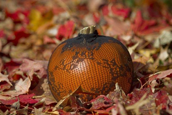 One of our Black Stocking Pumpkins, sans ribbon around stem.