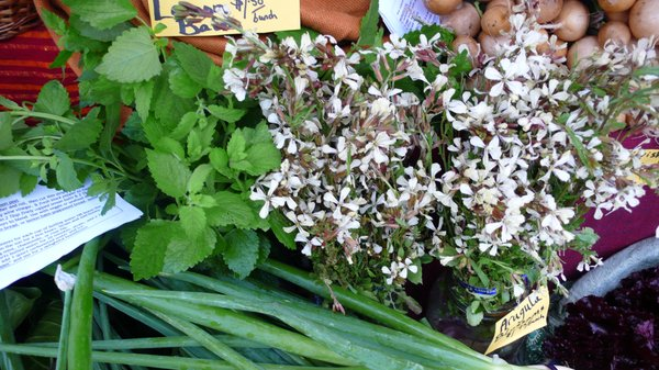 Arugula flowers, leaves and seeds are all edible and delightfully flavorful.