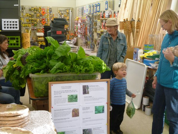 Fresh local produce - just in time for Thanksgiving dinner at Cottin's Hardware Farmers Market!