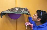 Ahmed Alsadah pets a kitten at the Kansas Humane Society in Wichita, Kansas on Nov.20, 2012. There is a kitty camera in the room that online visitors can control from their computer.