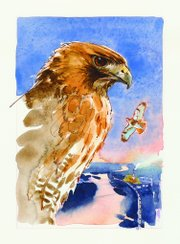 An illustration of a red-tailed hawk, published in&quot; A Kansas Bestiary.&quot;