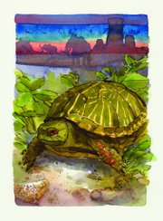 "An illustration of an ornate box turtle, published in ""A Kansas Bestiary."""