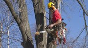 Hanging by a rope some 30 feet to 50 feet high in trees is a daily job for arborist Dan Parker-Timms, who owns Shamrock Trees Services Inc. of Lawrence. Parker-Timms' father was also an arborist.