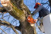 According to the Centers for Disease Control and Prevention, about 36,000 people are treated each year for chain-saw-related injuries, and the risk increases after storms where tree damage has occurred.