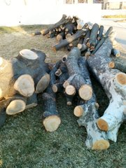 Some of the logs from trees cut down for the Lawrence Public Library renovation that will be available to artists for the Logs to Literature exhibition.