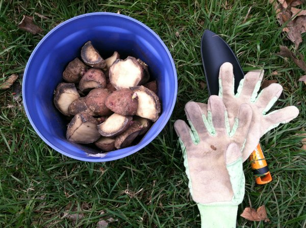 In the realm of potatoes, a little work goes a long way.