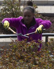 Kansas University sophomore Keiara Expose, Leavenworth, trims bushes in the terraces of the Lawrence High School football stadium during the third annual Big Event volunteer service day on Saturday. Nearly 3,000 KU students and staff members spread out across Lawrence performing volunteer duties such as mulching, weeding and planting flowers.