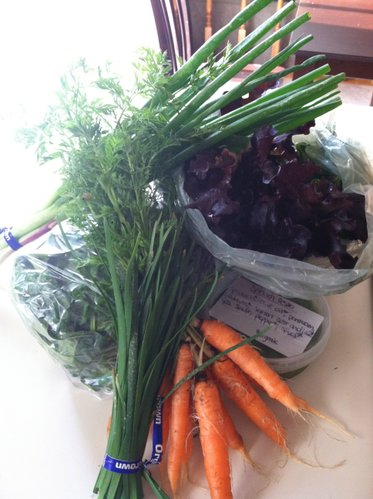 From our CSA this week: red lettuce, spinach, pesto, garlic chives, green onions and carrots.