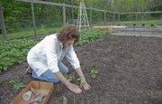 Sheila Reynolds plants sweet potato slips in her garden in rural Douglas County.