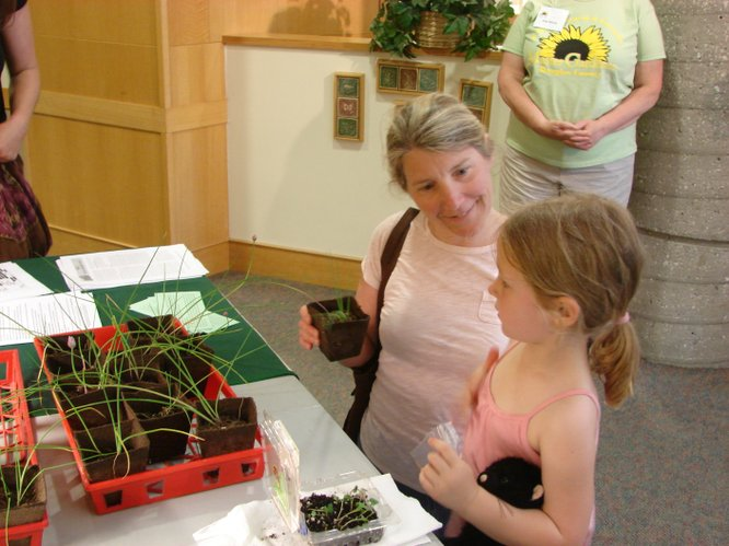 Taking home chive plants from the Master Gardeners