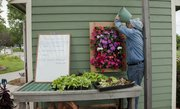 Master Gardner Jim Blom waters some impatiens Tuesday at the Master Gardeners Demonstration Garden at the Douglas County Fairgrounds.