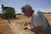 "Larry Craig does an old-time test on some wheat. ""It&squot;s hard and dry,"" Craig said, as he and his son, Mike, got started on their wheat harvest in Vinland."