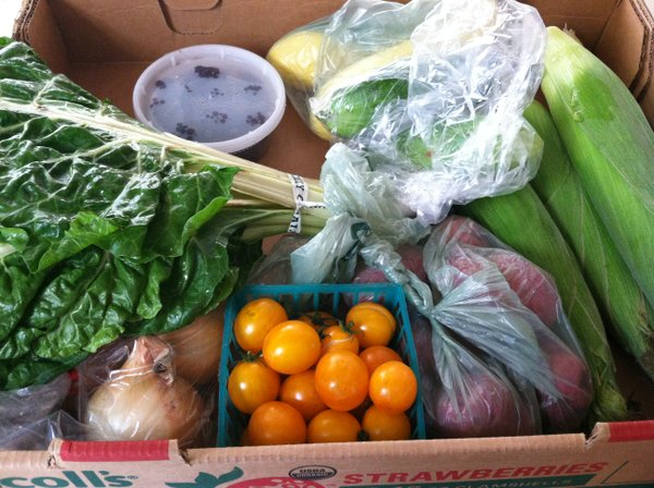 This week's goodness: cherry tomatoes, Swiss chard, yellow squash, cucumbers, onions, blackberries and potatoes.